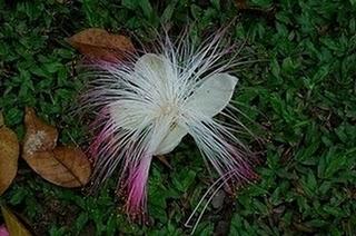 Bunga Teraneh di Dunia - http://kaskus-lover.blogspot.com/